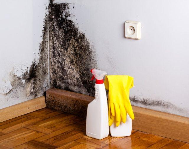 Jak poradzić sobie z pleśnią w domu?